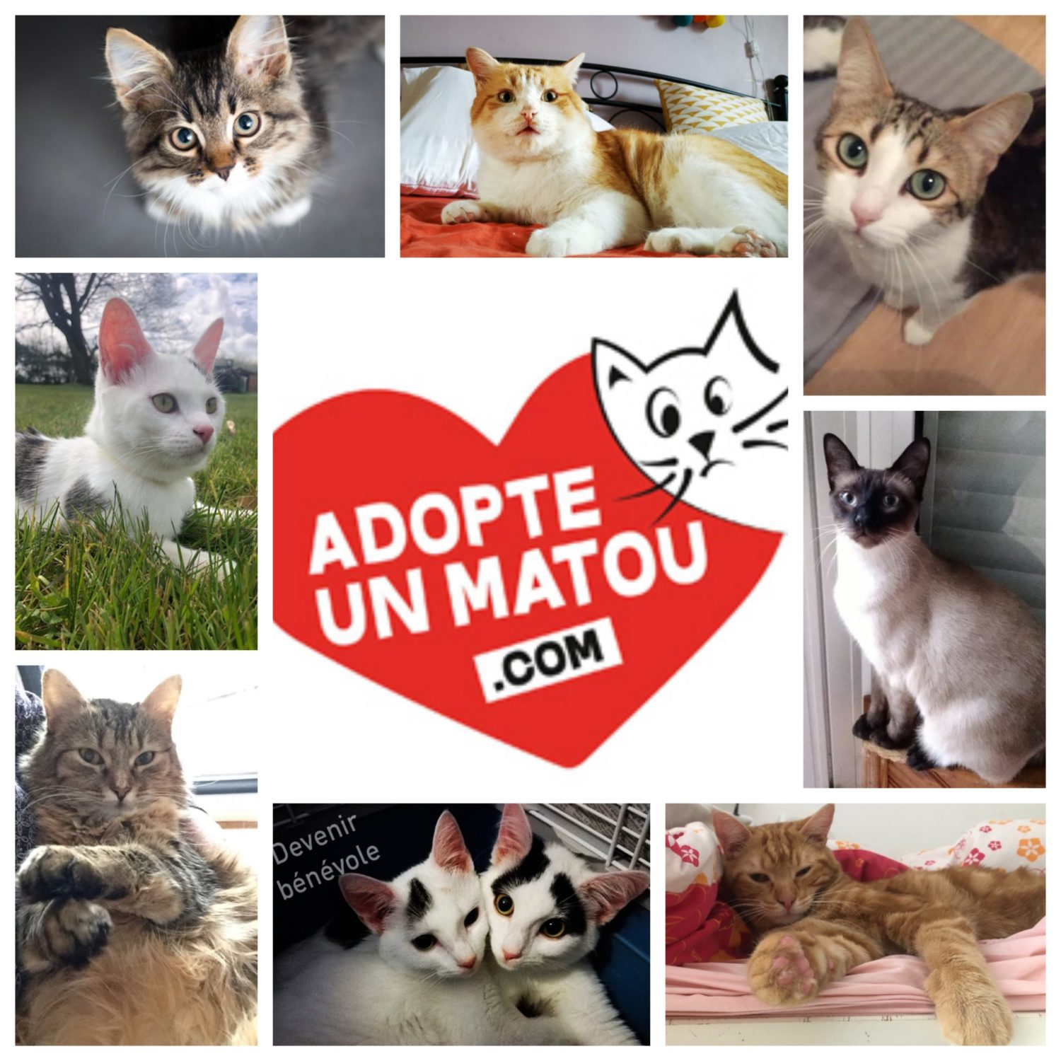 contact association chats chatons