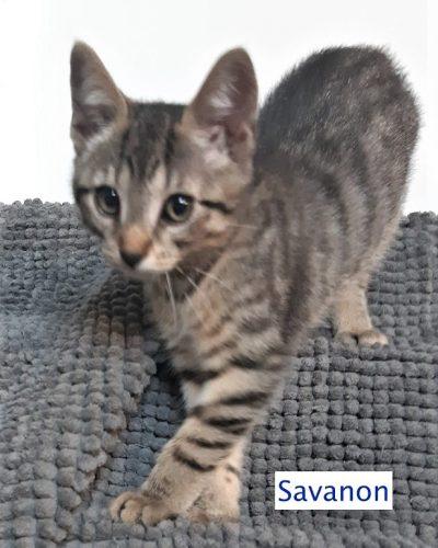 Savanon